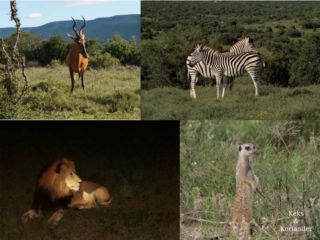 Die Highlights entlang der Garden Route in Südafrika
