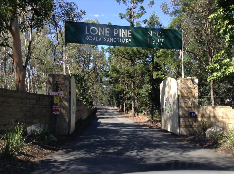 Lone Pine Koala Sanctuary in Brisbane