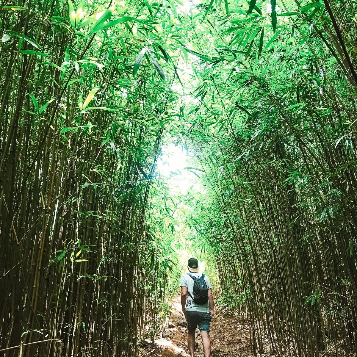 Der Bamboo Forest auf Maui